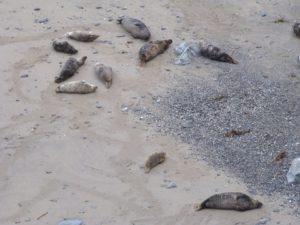 Godrevy seal sanctuary